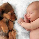 bebek ve köpek uyuyor