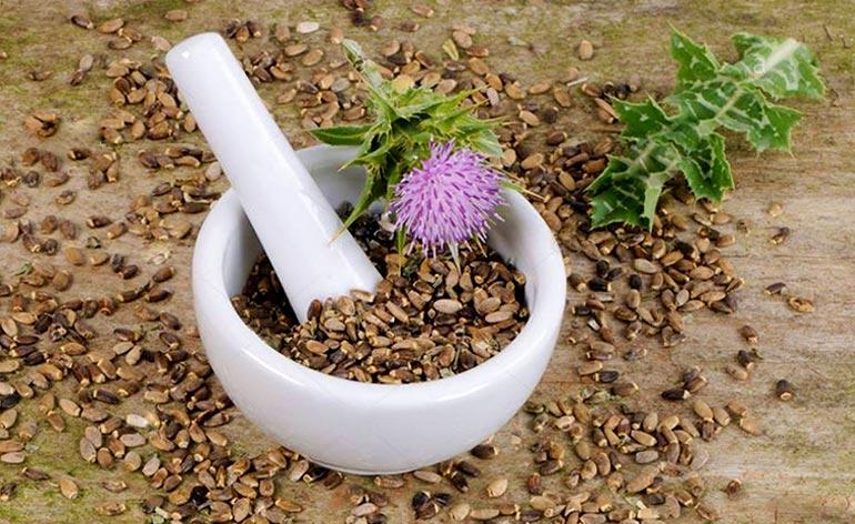 bitki havanı ve havanda bitki tohumları